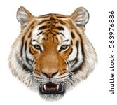 tiger head hand draw and paint... | Shutterstock . vector #563976886