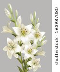 White Lily Bouquet. Isolated O...