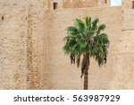 Date Palm Tree Against The...