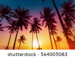 silhouette coconut palm trees... | Shutterstock . vector #564005083