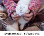 content cat with closed eyes...   Shutterstock . vector #564069448
