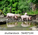 Young piglets outdoor on a farm - stock photo