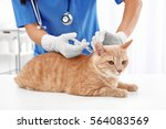 Stock photo veterinarian giving injection to red cat 564083569