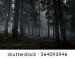 Stock photo foggy dark forest with a black slope 564093946