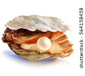 open oyster shell with... | Shutterstock . vector #564158458