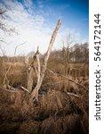 single dead tree in a wild... | Shutterstock . vector #564172144