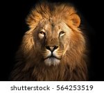 Stock photo lion king isolated on black 564253519