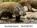 Постер, плакат: Two Komodo dragons one