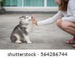 give me five  puppy pressing... | Shutterstock . vector #564286744