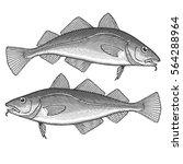 atlantic cod | Shutterstock .eps vector #564288964