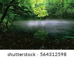 Mist On Pond In Forest