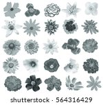 colorful bright flowers... | Shutterstock . vector #564316429