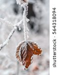 Brown Frozen Leaves Background...