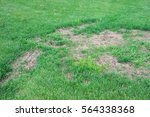 lawn in bad condition and need... | Shutterstock . vector #564338368