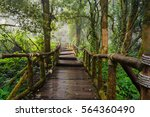walking path in rain forest at... | Shutterstock . vector #564360490