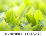 green nature with copy space... | Shutterstock . vector #564371494