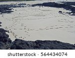 Small photo of a slew of footprints on a white sandy beach and basaltic rocks at Kimnyeong beach, jeju island, korea, asia