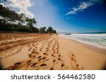 paradise beach on a tropical... | Shutterstock . vector #564462580
