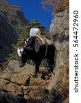 nepal lukla valley yaks b