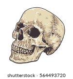 anatomic grunge skull vector... | Shutterstock .eps vector #564493720