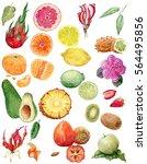tropical watercolor set. exotic ... | Shutterstock . vector #564495856