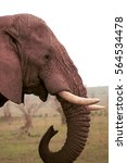 Small photo of African elephant, Maasai Mara Game Reserve, Kenya