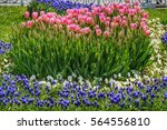 Colorful Flower Bed With Tulip...