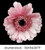 pink gerbera flower  black... | Shutterstock . vector #564562879