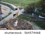 white stork with chicken | Shutterstock . vector #564574468