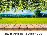 wooden table and ivy plant... | Shutterstock . vector #564584368