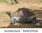 View At Galapagos Tortoise On ...