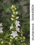 in the garden in bloom white... | Shutterstock . vector #564640834