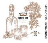 juniper tree and old bottle gin ...   Shutterstock .eps vector #564646984