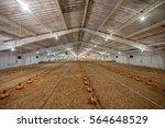 Chicken Farm Preparing To Move...