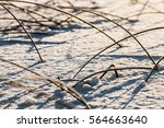 Frozen Grass And Reeds On...