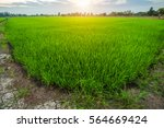 Cornfield Sunset Background In...