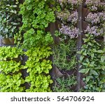 vertical herb garden in an... | Shutterstock . vector #564706924