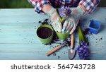 gardeners hand planting flowers ... | Shutterstock . vector #564743728