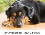 Stock photo cat and dog playing and sleeping 564754408
