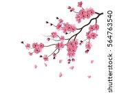 japanese sakura. the branch of...   Shutterstock . vector #564763540