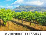 rows of grapes in picturesque... | Shutterstock . vector #564773818