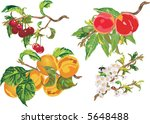 illustration with ripe peach ... | Shutterstock .eps vector #5648488