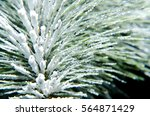 a close up of frozen pine tree... | Shutterstock . vector #564871429