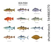 sea fish set. vector... | Shutterstock .eps vector #564883570