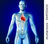3d render of a medical image of ... | Shutterstock . vector #564932614
