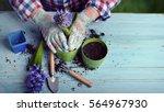 Gardeners Hand Planting Flower...