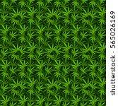 marijuana background vector... | Shutterstock .eps vector #565026169
