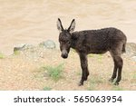 Small photo of a small soppy donkey standing on the river