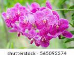 Pink Orchid Flower Blossom In ...
