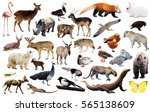 set of various asian isolated... | Shutterstock . vector #565138609